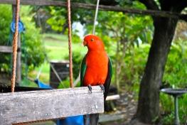 native wild birds
