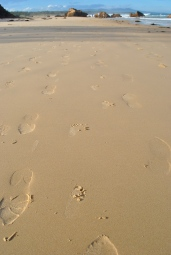a highway of footprints