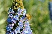bee gathering